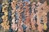 Lateritizované keramické jíly, Swasey Bladen