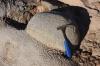 Kulovitá odlučnost jurského pískovce, Milne Land